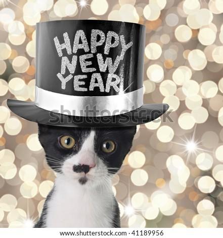 Cute kitten wearing a happy new year hat. - stock photo