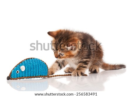 Cute kitten with colored toy mouse isolated on white background - stock photo