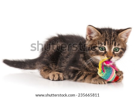 Cute kitten with colored toy mouse isolated on white background. Focus on the mouse - stock photo