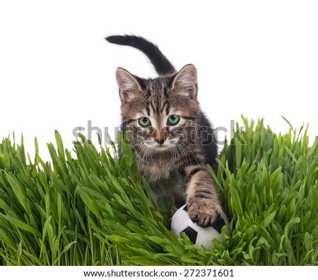 Cute kitten with football ball on the green grass over white background