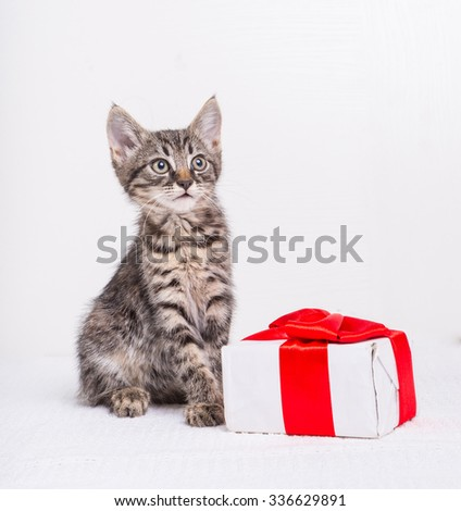 Cute kitten with present box on white background