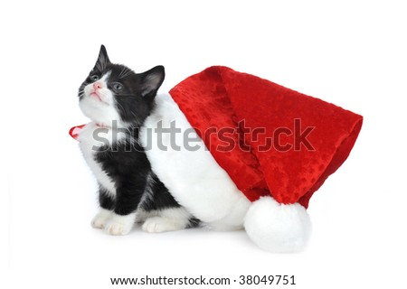 cute kitten with red santas hat - stock photo