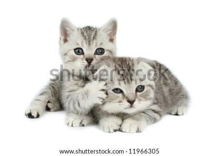 cute kittens - stock photo