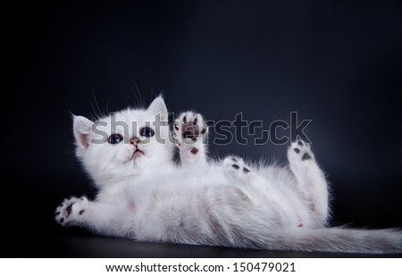 cute kittens cat - stock photo