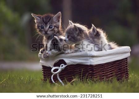 Cute kittens in a basket - stock photo