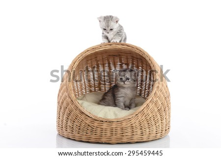 Cute kittens in wicker bed on white background isolated