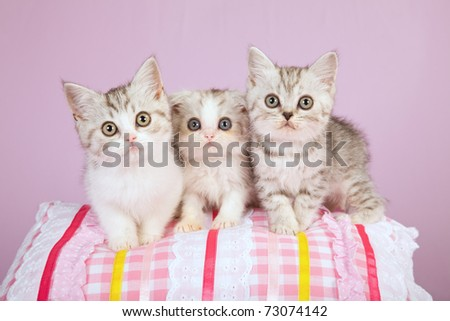 Cute kittens on colorful pillow - stock photo