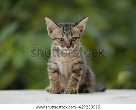 Cute kittens on green background .