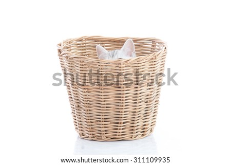 Cute kittens playing in a basket on white background isolated - stock photo