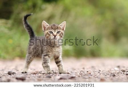 Cute kitty - stock photo