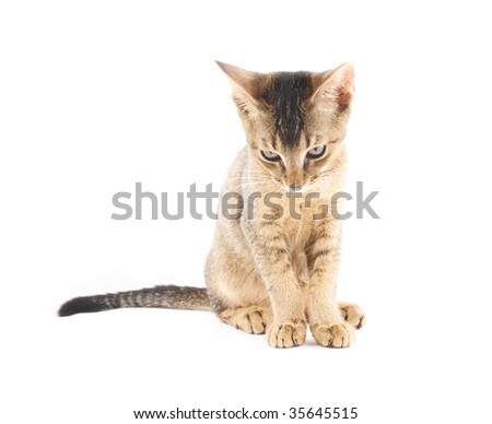 Cute kitty isolated on white background