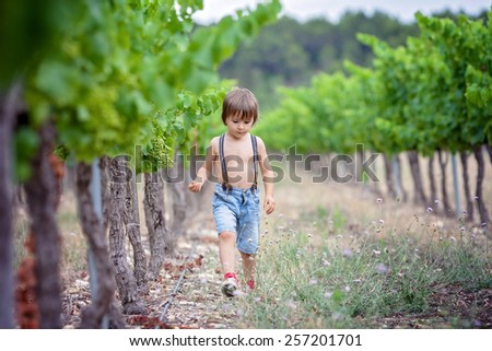 Cute laughing boy, running in a beautiful summer vine yard, daytime