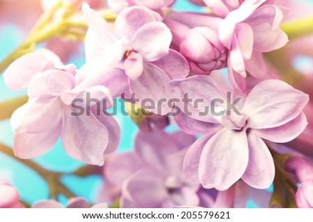 cute lilac flowers, macro shot - stock photo