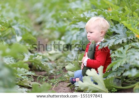 Cute little baby girl in colorful red sweater picking up ripe zucchini from a farm with vegetable field