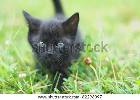 Cute little black cat in grass. - stock photo