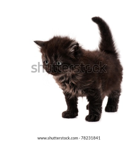 Cute little black kitten isolated on white background - stock photo