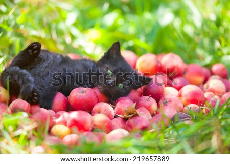 Cute little black kitten lying on back on red organic apples on green grass - stock photo