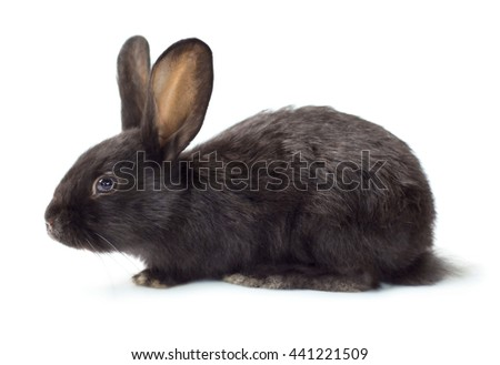Cute little black rabbit isolated on white background - stock photo