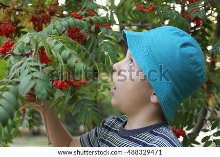 cute little boy near the rowan-tree