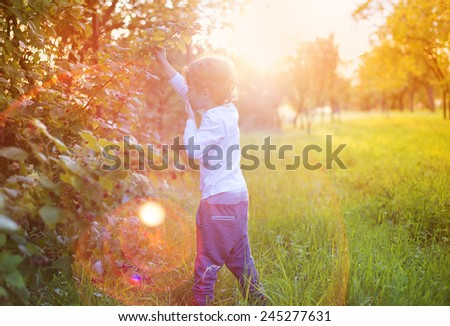 Cute little boy picking berries outside in a sunny garden - stock photo
