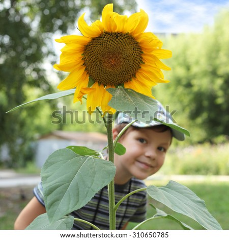 cute little boy with the big sunflower, focus on the flower - stock photo