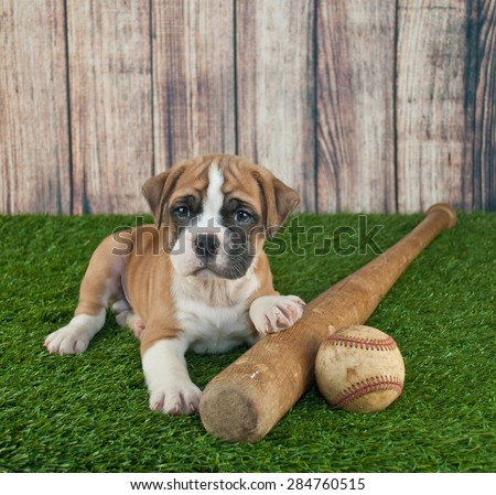 Cute little Bulldog puppy laying in the grass with a baseball and bat beside him.