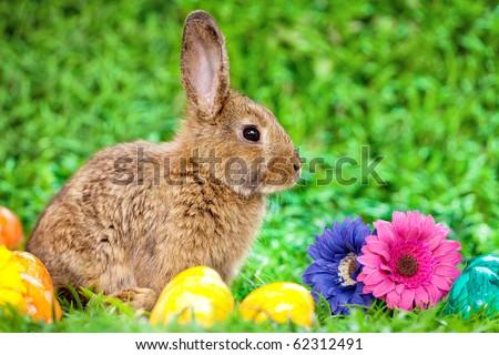 Cute little bunny - stock photo
