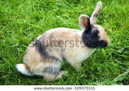 Cute little bunny (rabbit) on green grass - stock photo