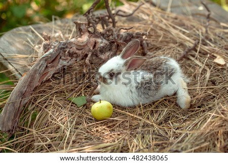 Cute little bunny rabbit with yellow apple and tree exposed roots on hay on natural background