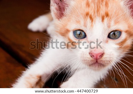 Cute little cat sitting on wood floor background.