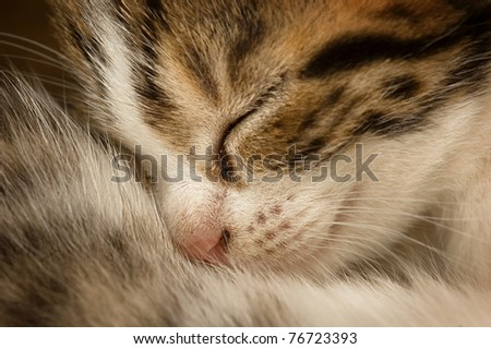 Cute little cat sleeping.