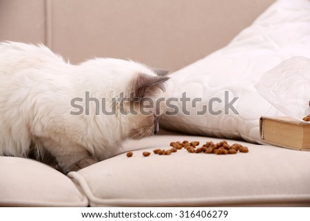 Cute little cat  with food on sofa, close-up - stock photo