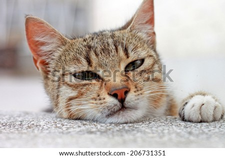 Cute little cat with tiger stripes close up shoot, portrait with one paw up - stock photo