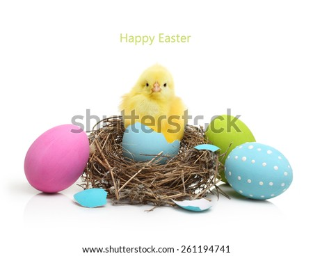 Cute little chicken coming out of the Easter egg in nest  isolated on white background - stock photo