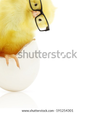 Cute little chicken in black eye glasses coming out of a white egg isolated on white background - stock photo
