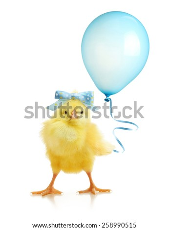 Cute little chicken with balloon isolated on white background - stock photo