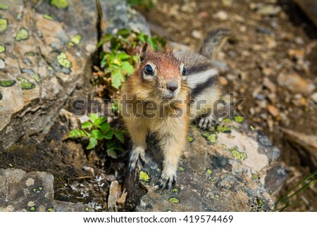 Cute little chipmunk sitting on a rock - stock photo