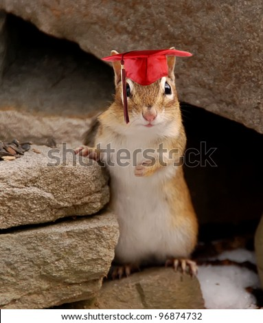 Cute little chipmunk wearing a graduation cap with tassel - stock photo