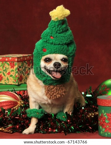 cute little Christmas dog - stock photo