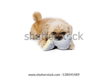 Cute little dog and isolated on white background