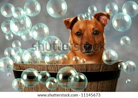 Cute little Dog in Barrel with Bubbles - stock photo