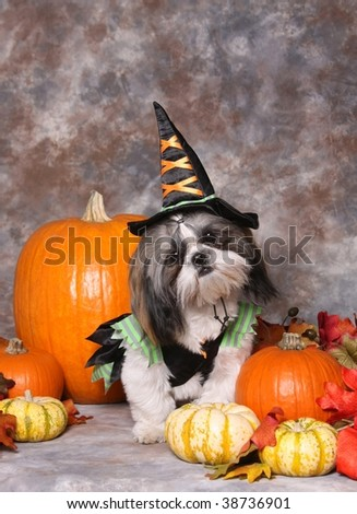 Cute little dog in Halloween costume - stock photo