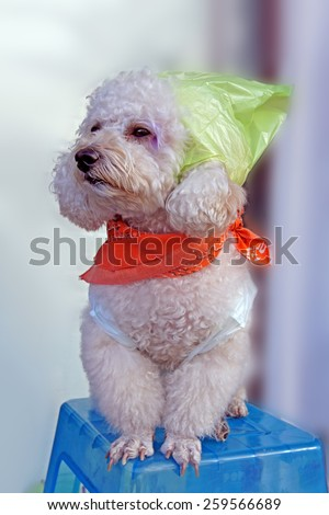 Cute little dog of funny dressed sitting on a chair - stock photo