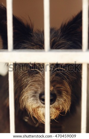 cute little dog puppy ponting nose in shelter cage, sad emotional moment, adopt me concept, space for text