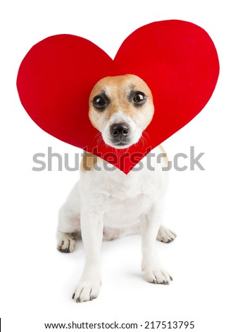 cute little dog with a heart shape on her head. - stock photo