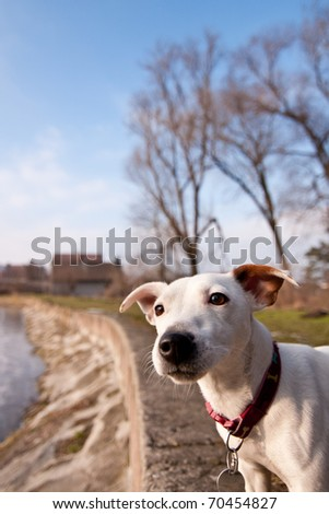 Cute little dog with curious look - stock photo