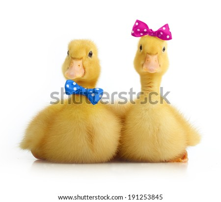 Cute little duckling with bow isolated on white background - stock photo