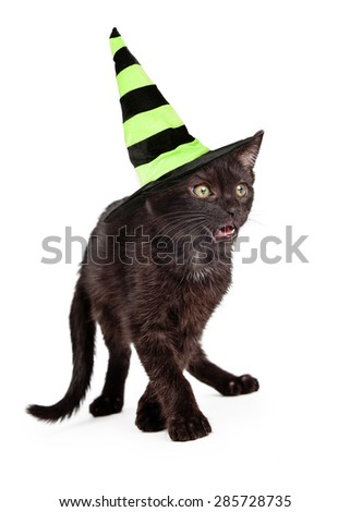 Cute little eight week old black kitten dressed as a witch for Halloween walking forward with mouth open - stock photo