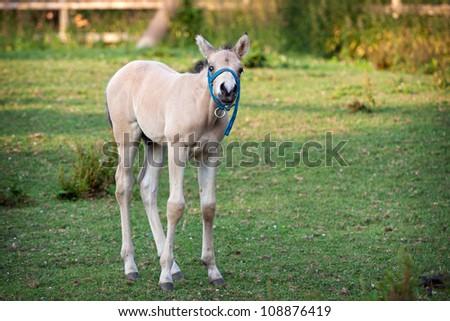 Cute little foal in a green meadow - stock photo
