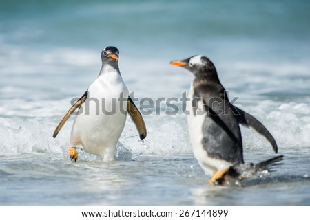 Cute little gentoo penguin neat the ocean water in Antarctica - stock photo
